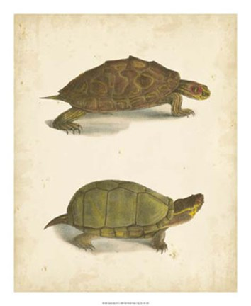 Framed Turtle Duo IV Print
