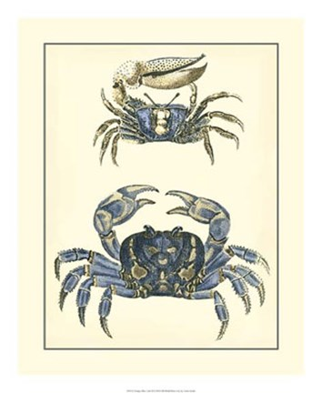 Framed Antique Blue Crabs II Print
