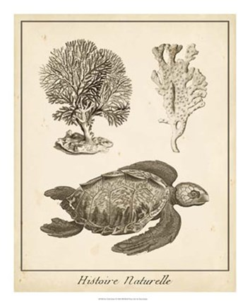 Framed Sea Turtle Study I Print