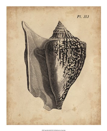 Framed Vintage Diderot Shell III Print