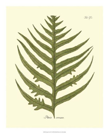 Framed Antique Fern VIII Print