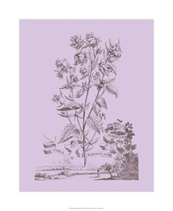 Framed Romantic Violet Print