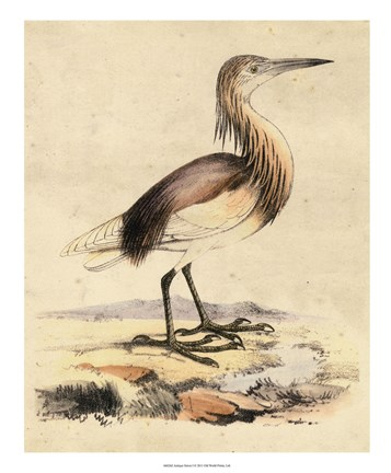 Framed Antique Heron I Print