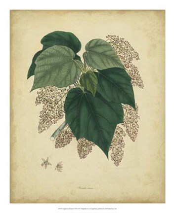 Framed Botanical VII Print
