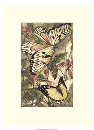 Framed Dancing Butterfly II Print