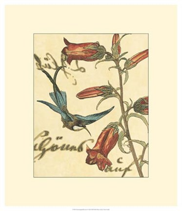 Framed Hummingbird Reverie I Print