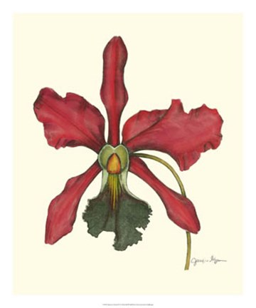 Framed Majestic Orchid IV Print