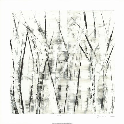 Framed Birches II Print
