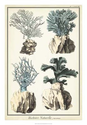 Framed Coral Species III Print