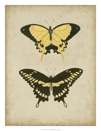 Framed Antique Butterfly Pair I Print