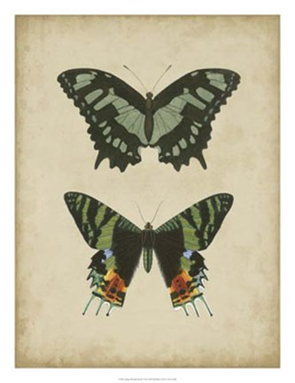 Framed Antique Butterfly Pair II Print