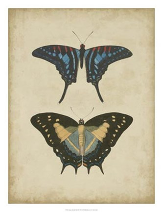 Framed Antique Butterfly Pair III Print