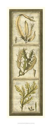Framed Exotic Seaweed Panel I Print