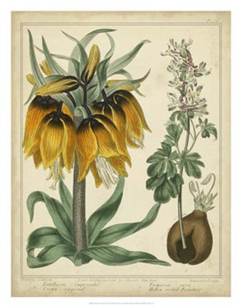 Framed Golden Crown Imperial Print
