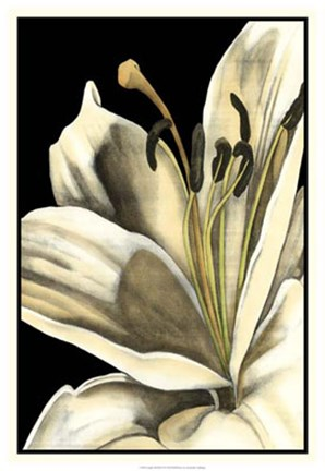 Framed Graphic Lily III Print