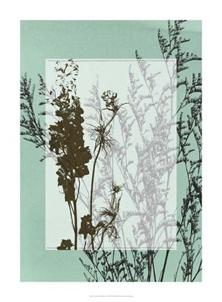 Framed Translucent Wildflowers I Print