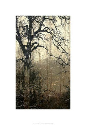 Framed Wooded Solace I Print