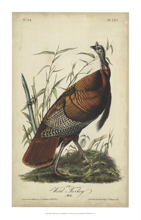 Framed Audubon Wild Turkey Print