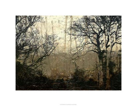 Framed Wooded Solace II Print