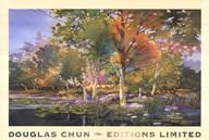 Birch Pond  Fine Art Print