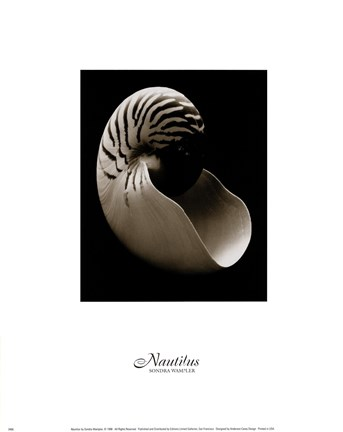 Framed Nautilus (small) Print