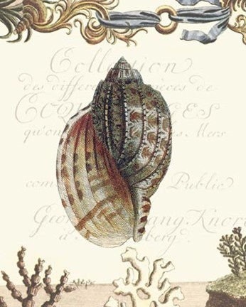Framed Coquilles III Print