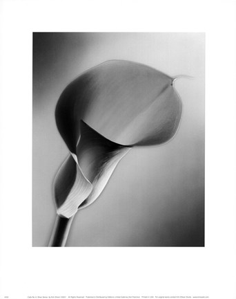 Framed CALLA NO.6  SILVER SERIES Print