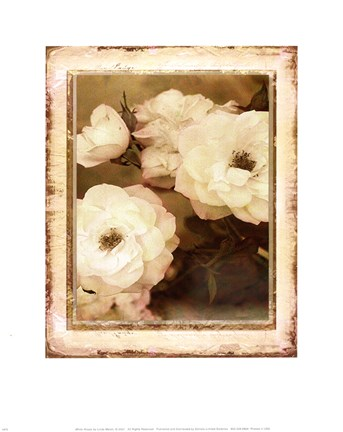 Framed ROSE- WHITE Print