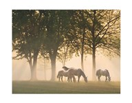Horses in the mist Art