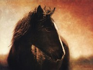 Monero Mustang  Fine Art Print