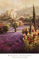 Fields of Lavender Art