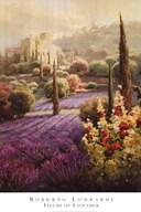 Fields of Lavender  Fine Art Print