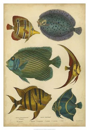 Framed Non-Emb. Goldsmith's Spinous Fishes Print