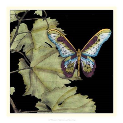 Framed Butterfly on Vine II Print