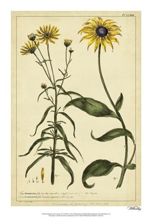 Framed Rudbeckia and Coreopsis, Pl. CCXXIV Print