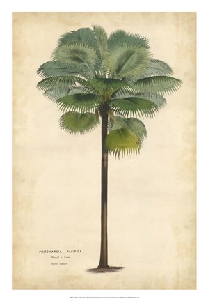 Framed Palm of the Tropics II Print
