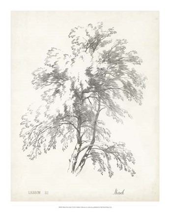 Framed Birch Tree Study Print