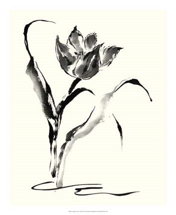 Framed Studies in Ink - Tulip Print