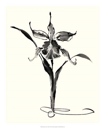 Framed Studies in Ink - Cattleya Print