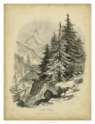 Framed Larch Print