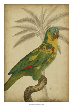 Framed Parrot and Palm II Print