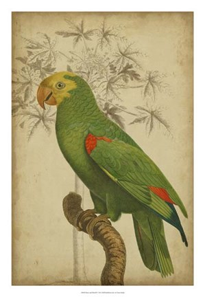 Framed Parrot and Palm III Print