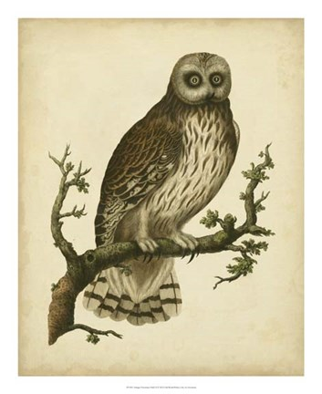 Framed Antique Nozeman Owl II Print