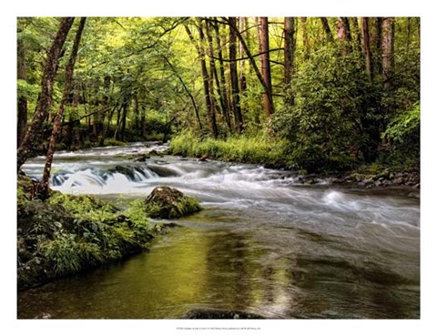 Framed Sunlight on Jake's Creek I Print