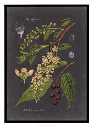 Framed Midnight Botanical II Print