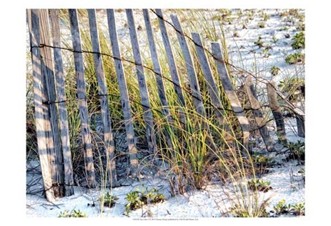Framed Sea Oats I Print