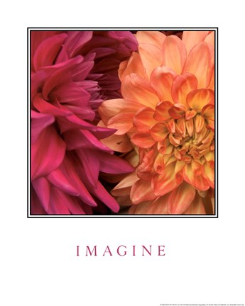 Framed Imagine Flowers Print