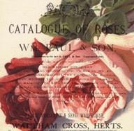 Roses II Art