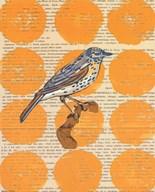 Bird Study I Art