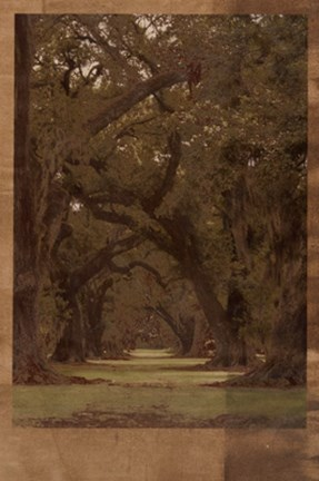 Framed Low Country Trees I Print